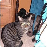 Adopt A Pet :: Micha - Warren, MI
