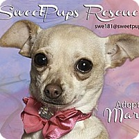 Adopt A Pet :: Mardi - Vidor, TX