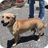 Adopt A Pet :: Sheldon URGENT!!! REDUCED!!!! - Staunton, VA