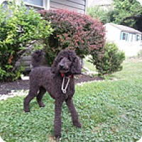 Adopt A Pet :: Mike - Madison, WI