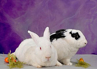 Florida White Mix for adoption in Marietta, Georgia - Mallory