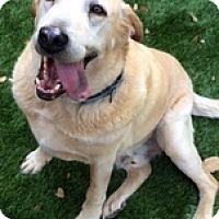 Adopt A Pet :: Billy3 - Torrance, CA