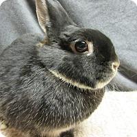 Adopt A Pet :: Abby Rose - Newport, DE