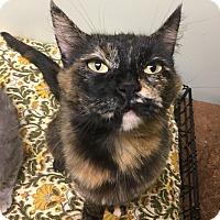 Adopt A Pet :: Ivy - Tioga, PA