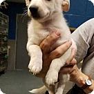 Adopt A Pet :: Cotton (Has Application)