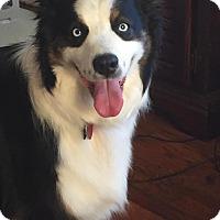 Adopt A Pet :: Cash - Sherman, CT