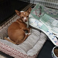 Adopt A Pet :: Minnie/TN - Columbia, TN