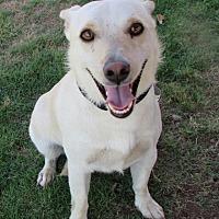 Adopt A Pet :: Corgi Mix - Lomita, CA