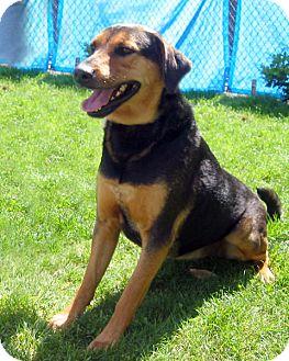 German Shepherd Dog/Retriever (Unknown Type) Mix Dog for adoption in Marina del Rey, California - Samantha