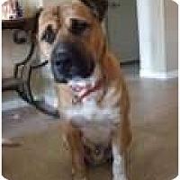 Adopt A Pet :: Raja - Only $25 adoption fee! - Litchfield Park, AZ