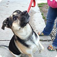 Adopt A Pet :: Pallie - Tinton Falls, NJ