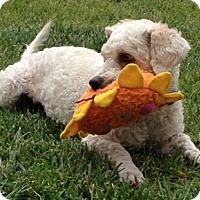 Adopt A Pet :: Blossom-WATCH MY VIDEO!!! - Irvine, CA