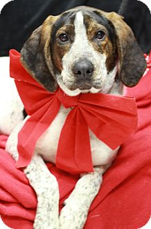Hound (Unknown Type) Mix Dog for adoption in Twin Falls, Idaho - Jack
