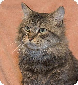 Domestic Mediumhair Cat for adoption in Elmwood Park, New Jersey - Jinx