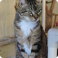 Adopt A Pet :: Jack - MARENGO, IL