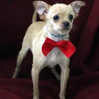 Adopt A Pet :: Jeremy - Dalton, GA
