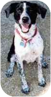 Border Collie Mix Dog for adoption in Ferryville, Wisconsin - Ducky