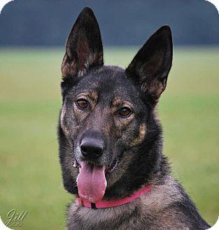 German Shepherd Dog Mix Dog for adoption in Winnipeg, Manitoba - Chanel