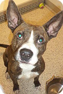 Terrier (Unknown Type, Medium) Mix Dog for adoption in Akron, Ohio - Ricki