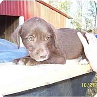 Adopt A Pet :: Gruff - Glastonbury, CT