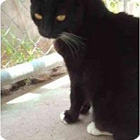 Adopt A Pet :: Cookie - El Cajon, CA