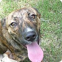 Adopt A Pet :: Annie - Pointblank, TX