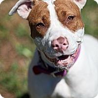 Adopt A Pet :: Dory - Miami, FL