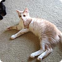 Adopt A Pet :: Tigger - Rohnert Park, CA