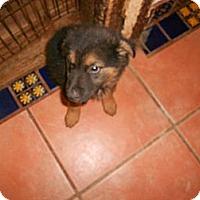 Adopt A Pet :: Bert - San Diego, CA