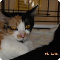Adopt A Pet :: Sweetie - Riverside, RI