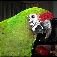 Adopt A Pet :: Maggie - Lenexa, KS