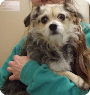Terrier (Unknown Type, Medium) Mix Dog for adoption in Cheboygan, Michigan - Timmy