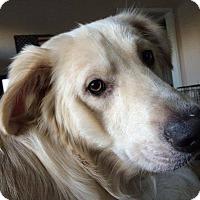 Adopt A Pet :: Jackson - Adopted! - Croydon, NH