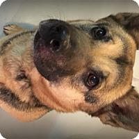Adopt A Pet :: Mena - Muskegon, MI