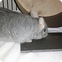 Adopt A Pet :: Paul - Avondale, LA