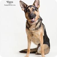 Adopt A Pet :: Hans - Chandler, AZ