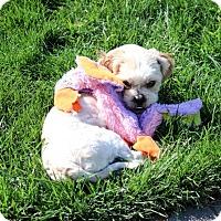 Adopt A Pet :: Ernie - Antioch, CA