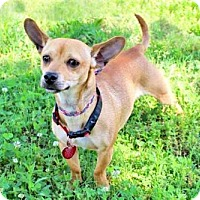 Adopt A Pet :: TIQUILA - richmond, VA