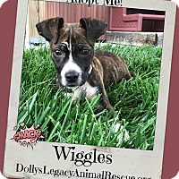 Adopt A Pet :: WIGGLES - Lincoln, NE