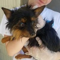 Terrier (Unknown Type, Small) Mix Dog for adoption in Tulsa, Oklahoma - Apache