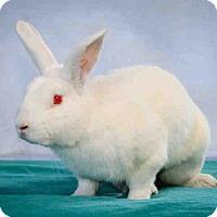 Adopt A Pet :: FROSTY - Gardena, CA