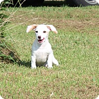 Adopt A Pet :: Jason - Harmony, Glocester, RI