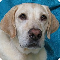 Adopt A Pet :: Butch Phoebe - Cuba, NY
