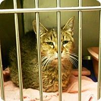 Adopt A Pet :: Lucia - Lauderhill, FL