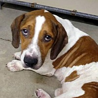 Adopt A Pet :: NOODLES - ADOPTION PENDING! - Pennsville, NJ