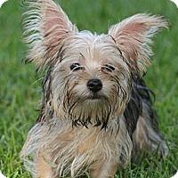 Adopt A Pet :: Evan - CAPE CORAL, FL