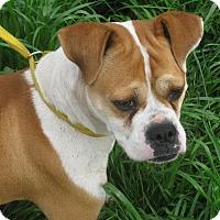 Adopt A Pet :: Madison - Albany, NY