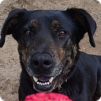 Adopt A Pet :: Buddy II - Ravenel, SC