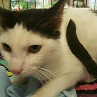 Adopt A Pet :: Thumper - Rosemead, CA