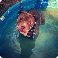 Adopt A Pet :: Hooch - Odessa, TX